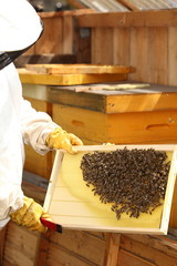 Imker mit Bienenstock