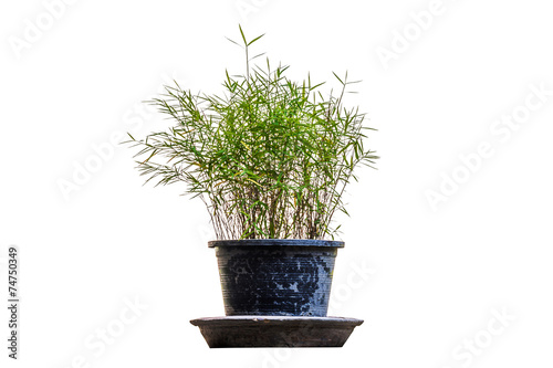 In de dag Bamboo Little Bamboo.