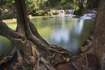 beautiful tree root foreground and waterfalls in pure deep fores