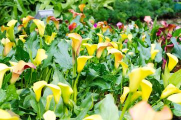 Yellow flower in winter garden