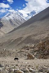Lone Black Horse ans Snow Mountain Range