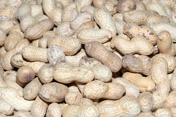 bunch of fresh peanuts for food