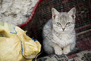 The cat on the sackcloth.