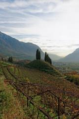 Vineyards of Trentino, Italy