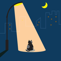 Cat waiting under street light