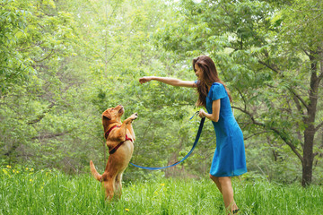 Woman playing with labrador dog in summer
