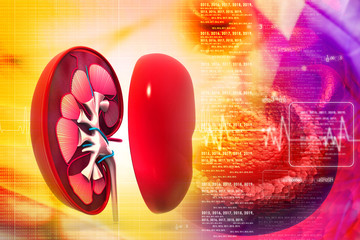 Human kidney in abstract background