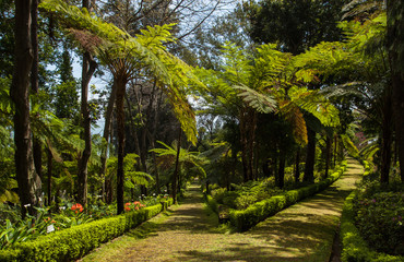 Path in Botanic Garden on Madeira