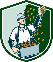 Fruit Picker Worker Picking Plum Shield