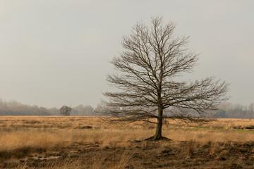 abgestorbener Baum im Hochmoor
