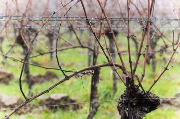 Weingarten im November