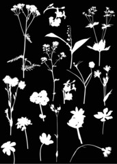 seventeen white wild flowers on black