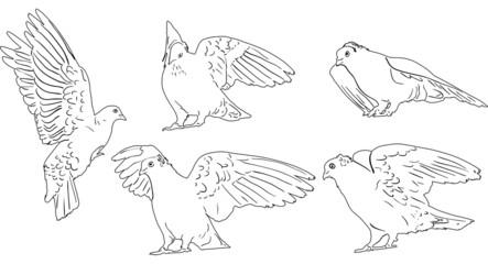 five white sketches of pigeons