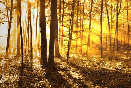 Poster Landschappen forest