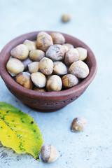 Hazelnuts harvest