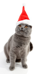 Lovely British cat in Christmas hat isolated on white