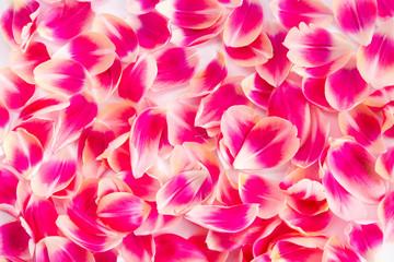 Tulpenblätter-Hintergrund