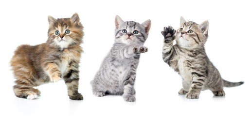 Set of various kittens with paw up isolated