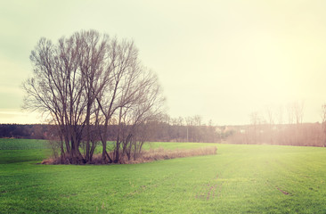Sunset over field, vintage retro style nature background.