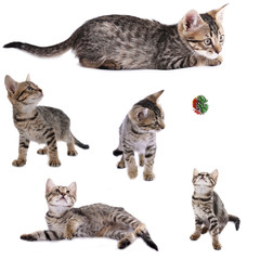 Collection of cute kitten isolated on white