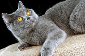 отдых кошки