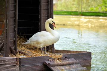 pato en una cabaña de madera