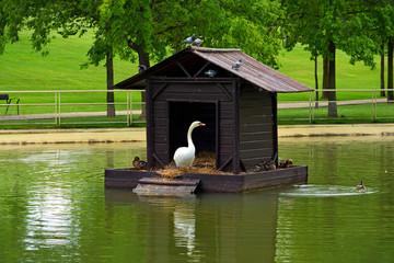 pato en su cabaña flotante en un estanque