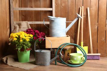 Chrysanthemum bush in pot, tools for gardening