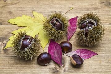 Früchte der Edelkastanie