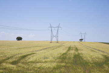 electric towers in wheat field