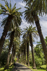tall palm trees located in the Tropical Botanical garden.