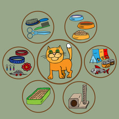 Infographics. Domestic cats and all that is necessary for the