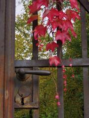 カエデと鉄の門