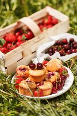 summer muffins