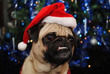 Christmas Pug Wearing a Santa Hat