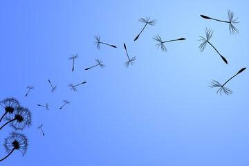 Dandelion silhouette on a blue sky