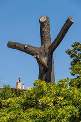 Tree with unusual shape