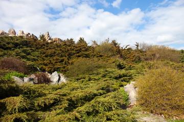Rockery (alpine garden) in Kyiv botanical garden