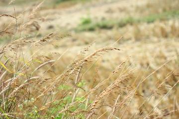 It looks barren fields after harvest.
