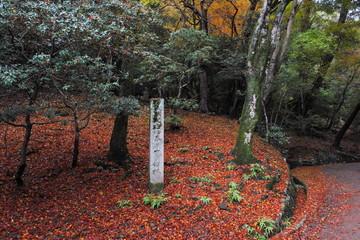 天然記念物春日山原始林の石碑と紅葉