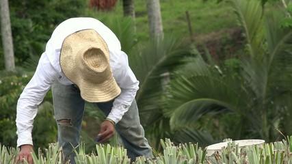 Farmer, Laborer, Worker