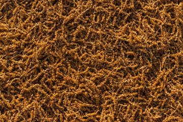 Tree Seed Texture.tif