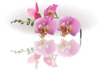 pink orchid flowers with reflection