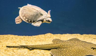 turtle and stingray