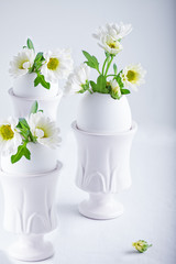 Bunch of white chrysanthemum flowers growing from egg shell