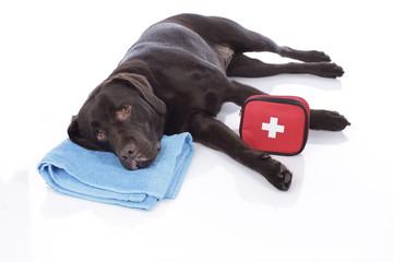 Labrador mit Erste Hilfe Täschchen