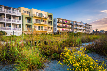 Flowers and beachfront buildings in Folly Beach, South Carolina.
