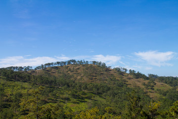 Hills covered with forest