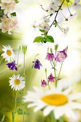 beautiful image of flowers in the garden closeup