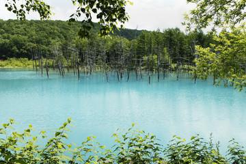 初夏の青い池